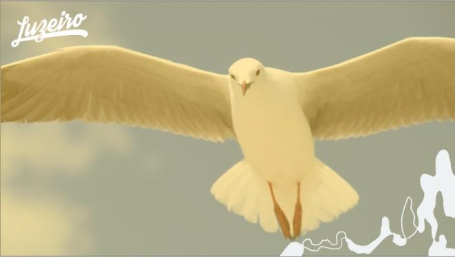 Pomba representando o Espírito Santo de Deus